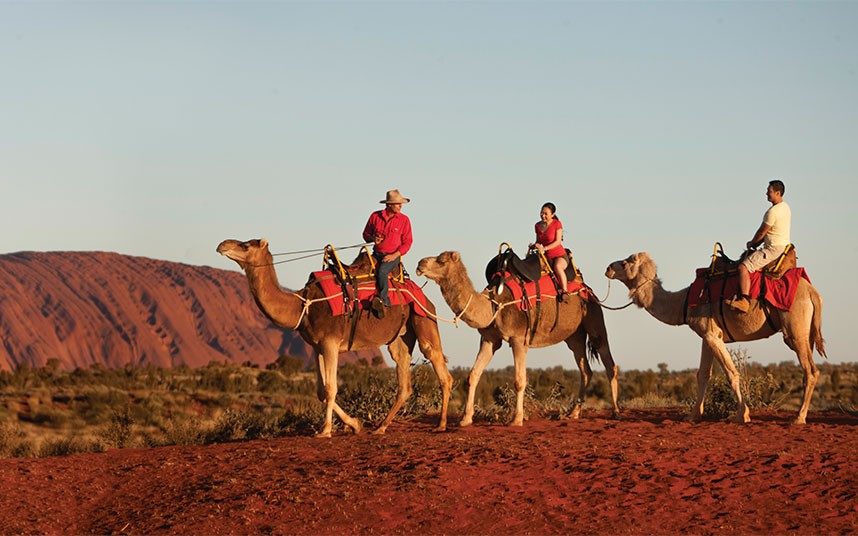 Uluru Camel Tours Photo