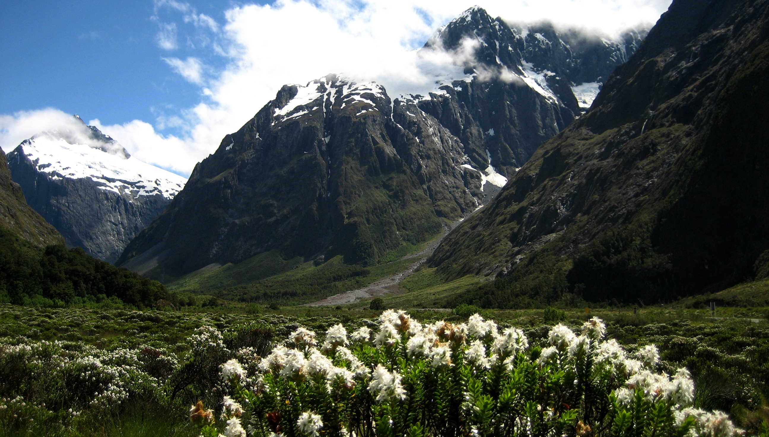Fiordland National Park Pictures