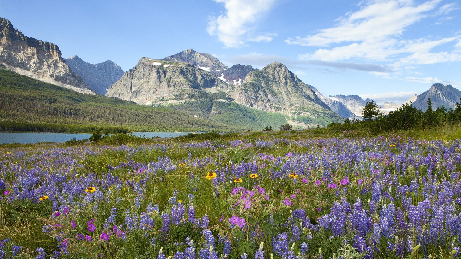 Glacier National Park Flowers Photo